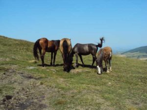Horses on Mount Leinster